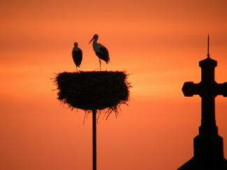 storks at sunset